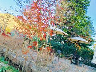 庭の木の写真・画像素材[890337]