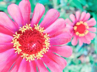 花のアップの写真・画像素材[1038825]