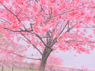 春の公園の写真・画像素材[1095039]