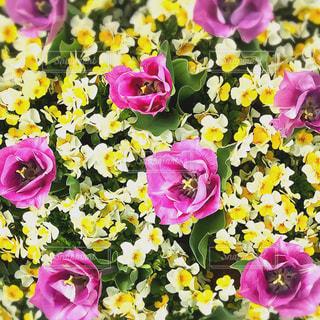 春の花々の写真・画像素材[1105471]
