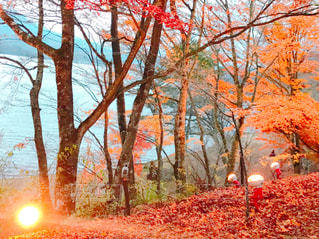 山中湖紅葉まつりの写真・画像素材[1611473]