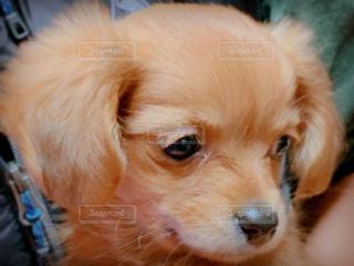 子犬の写真・画像素材[3135567]