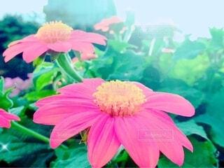 花のクローズアップの写真・画像素材[3659347]