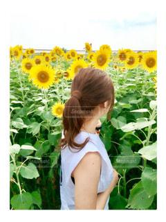 黄色の写真・画像素材[600219]