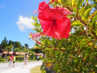 花の写真・画像素材[617166]