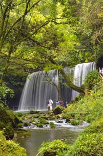 森の中の大きな滝の写真・画像素材[763193]