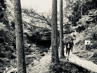森の人々 のグループの写真・画像素材[763195]