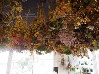 木の花の花瓶の写真・画像素材[763217]