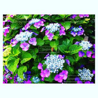 花の写真・画像素材[580651]
