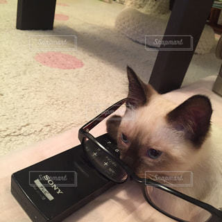 No.580797 猫