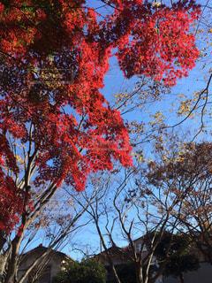 近くの木のアップの写真・画像素材[776251]