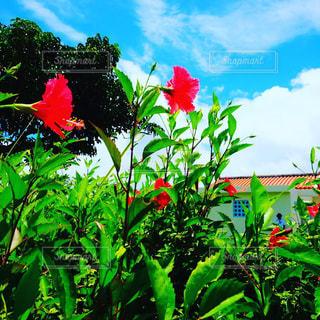 植物のカラフルな花の写真・画像素材[2422852]