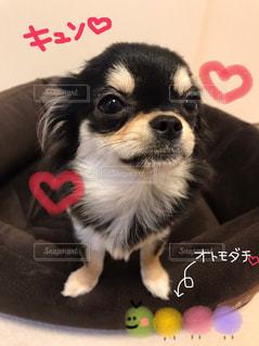 No.581143 犬