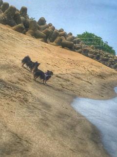 No.581146 犬