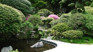 庭の写真・画像素材[581282]