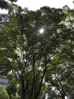 森林 - No.62553