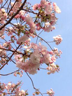 花の写真・画像素材[590522]