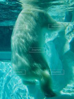 動物 - No.594835