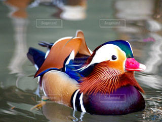 自然の写真・画像素材[594839]