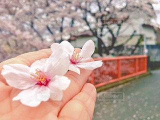 花の写真・画像素材[597128]