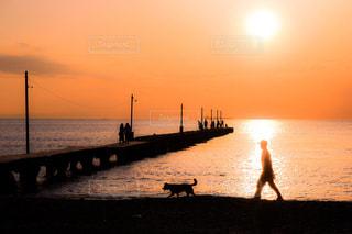犬の写真・画像素材[581941]