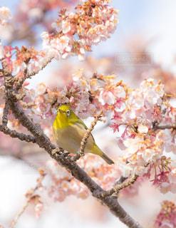 春の写真・画像素材[1008179]