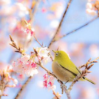 木の上の小鳥の写真・画像素材[1008180]