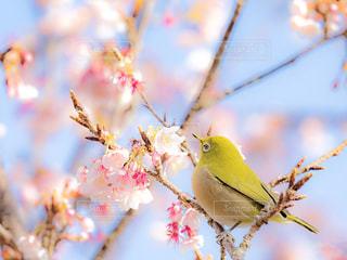 春の写真・画像素材[1008181]