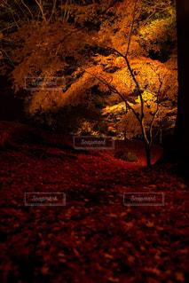 黄色と赤色の写真・画像素材[875686]