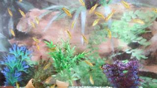 魚の写真・画像素材[582142]