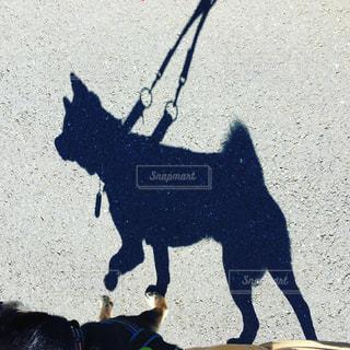 犬 - No.582291