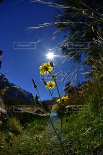花の写真・画像素材[582762]