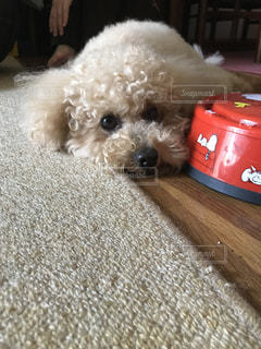犬の写真・画像素材[582765]