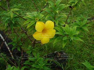 花の写真・画像素材[590005]