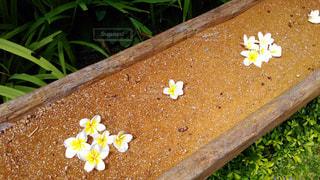 花の写真・画像素材[594688]