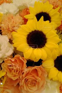 花の写真・画像素材[595865]