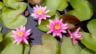 花の写真・画像素材[599937]