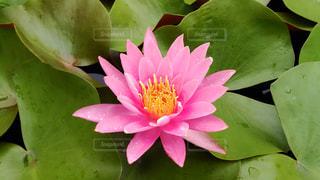 花の写真・画像素材[599938]