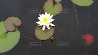 花の写真・画像素材[599939]