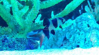 No.601664 魚