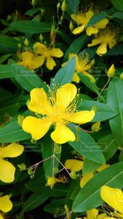花の写真・画像素材[602235]