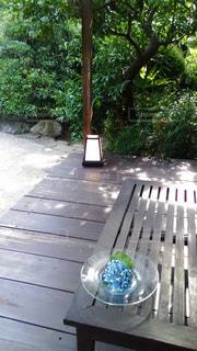 庭の写真・画像素材[602237]