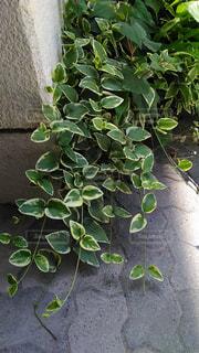 庭の写真・画像素材[606127]