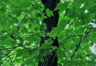 自然の写真・画像素材[653319]