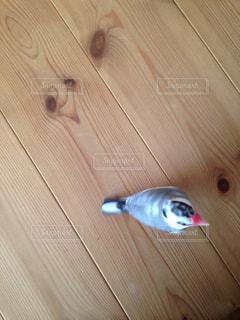 No.586124 鳥