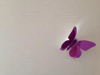 紫の写真・画像素材[618904]