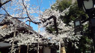 No.585325 風景