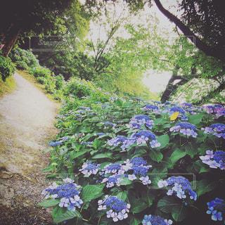 花の写真・画像素材[590506]