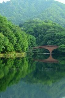 自然の写真・画像素材[52999]