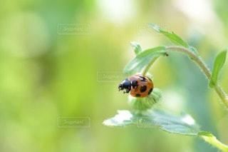 自然の写真・画像素材[53039]